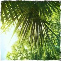 Leafery